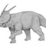 Achelousaurus horn