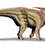 Achelousaurus right view