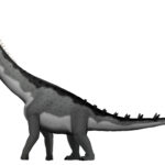 Alamosaurus long neck scaled
