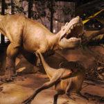 Albertosaurus fightinh scaled