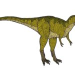 Albertosaurus right view scaled