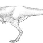 Alectrosaurus height