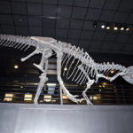 Allosaurus skeleton