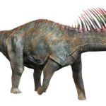 Amargasaurus right view