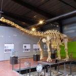 Ampelosaurus skeleton scaled