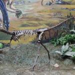 Archaeornithomimus skeleton