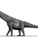 Argentinosaurus left view