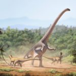Barosaurus fighting scaled