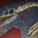 Baryonyx head and forelimb