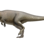 Carcharodontosaurus sideview