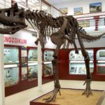 Carnotaurus full body skeleton