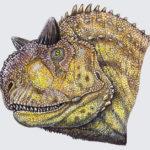 Carnotaurus head