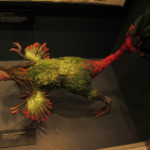 Caudipteryx model