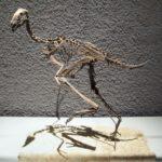 Caudipteryx skeleton