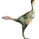 Caudipteryx standing