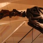 Cetiosaurus neck scaled