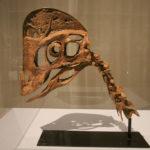 Chirostenotes skull