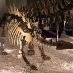 Chungkingosaurus skeleton