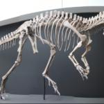 Cryolophosaurus skeleton