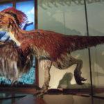 Deinonychus flip wings scaled