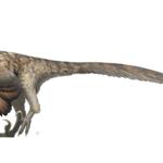 Deinonychus with feathers