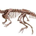 Dilophosaurus skeleton