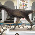 Dilophosaurus standing