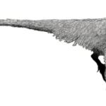 Dromaeosaurus flip wings