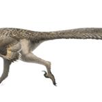 Dromaeosaurus running