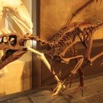 Dromaeosaurus skeleton scaled