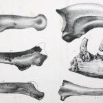 Dryptosaurus specimen