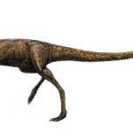 Elaphrosaurus walking scaled