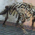 Euoplocephalus skeleton