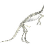 Eustreptospondylus sketch skeleton