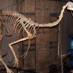 Gallimimus skeleton scaled