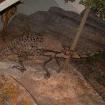 Gargoyleosaurus skeleton