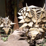 Gastonia skeleton