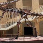 Giganotosaurus skeleton