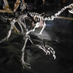 Guanlong mounted skeleton scaled