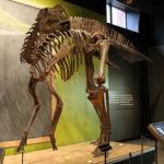 Hadrosaurus skeleton