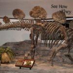 Hesperosaurus skeleton