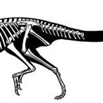 Heterodontosaurus sketch skeleton