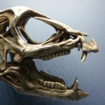 Heterodontosaurus skull scaled