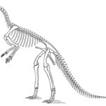 Hypsilophodon standing sketch skeleton