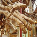 Iguanodon hand specimen