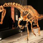Irritator skeleton