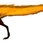 Leaellynasaura long tail scaled