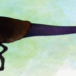 Lesothosaurus long tail