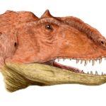 Majungasaurus head