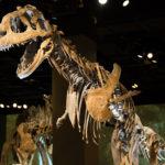 Majungasaurus skeleton